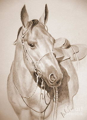 Drawing - Horse Drawing by Eleonora Perlic