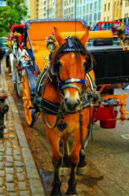 Carriage Horse Photograph - Horse Drawn Carriage In New York City by Dan Sproul