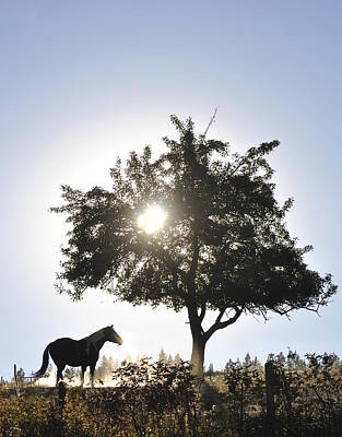 Horse Dreaming Under Tree Art Print by Michael Dohnalek