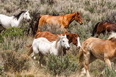 Photograph - Horse Drive Chaos 2 by John McArthur