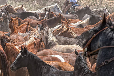 Horse Drive Chaos Art Print