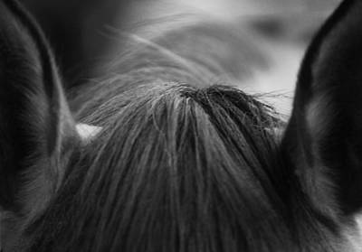 Photograph - Horse Ears And Forelock by Larah McElroy