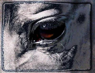 Horse Eye Art Print by Gun Legler