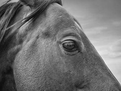 Horse Eye Photograph - Horse Eye by Leland D Howard