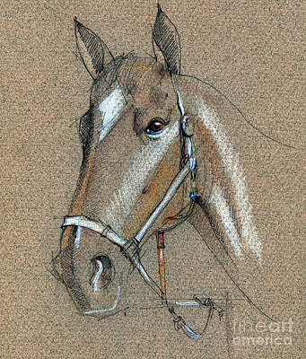 Drawing - Horse Face Drawing by Daliana Pacuraru