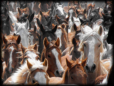 Horse Faces Art Print