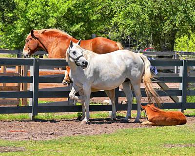 Photograph - Horse Family by Mary Almond
