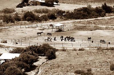 Horse Farm At Kourion Print by John Rizzuto