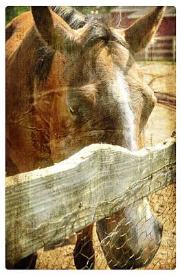 Katharine Hepburn - Horse Farm by Davina Washington