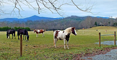 Photograph - Horse Farm In Eastern Transylvania County by Duane McCullough