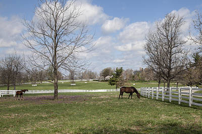 Photograph - Horse Farm by Jack R Perry