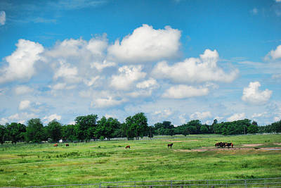 Photograph - Horse Farm - Oklahoma by Paulette B Wright