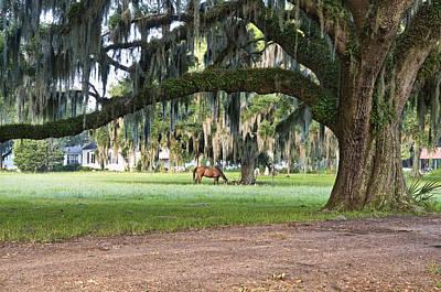Farm Photograph - Horse Feeding Under Live Oak by Scott Hansen