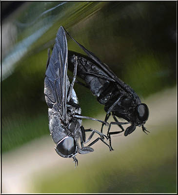 Art Print featuring the photograph Horse Fly by DigiArt Diaries by Vicky B Fuller