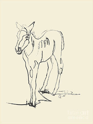 Foal Drawing - Horse- Foal -josje by Go Van Kampen