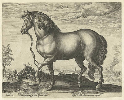 Running Horses Drawing - Horse From Calabria, Hendrick Goltzius, Philips Galle by Hendrick Goltzius And Philips Galle