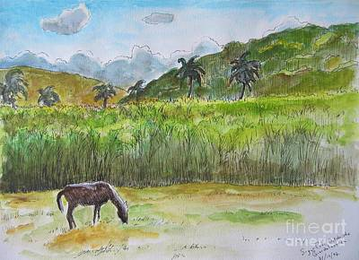 Lush Drawing - Horse Grazing With Sugar Cane Field In Background by John Malone