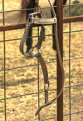 Photograph - Horse Halter by David Lester