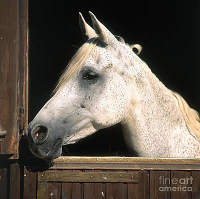 Horse Print by Hans Reinhard