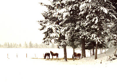 Photograph - Horse Haven In Winter by Robert  Rodvik