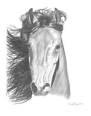 Wild Horses Drawing - Horse Head by Cristi Boliver