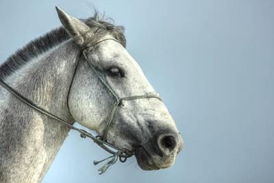 Art Print featuring the photograph Horse Head-shot by Eti Reid