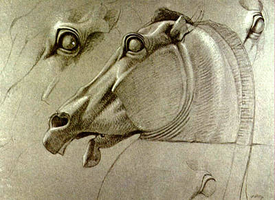 Benjamin Drawing - Horse Head Sketch by