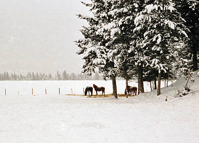 Photograph - Horse Heaven by Robert  Rodvik