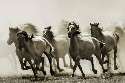 Running Wall Art - Photograph - Horse by Heidi Bartsch