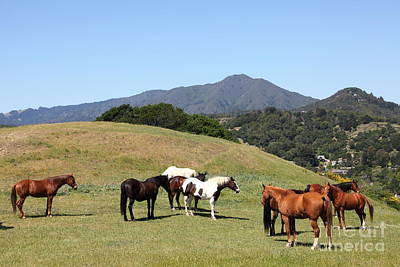 Horse Hill Mill Valley California 5d22672 Art Print by Wingsdomain Art and Photography