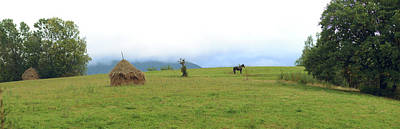 Horse In A Field, Bran, Brasov County Art Print by Panoramic Images