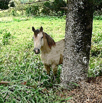 Photograph - Horse In A Meadow by John Orsbun