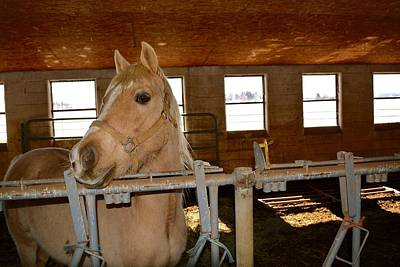 Photograph - Horse In Barn In Winter by Tana Reiff