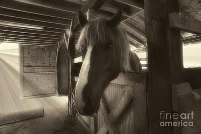 Horse In Barn Stall Art Print by Dan Friend