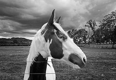 Horse Ears Photograph - Horse In Black And White by Steven Michael