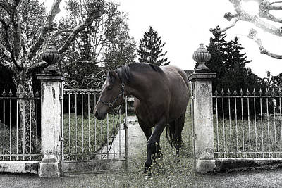 Horse In Europe Art Print