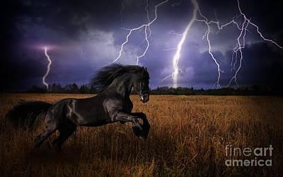 Horse In Gold Field Original