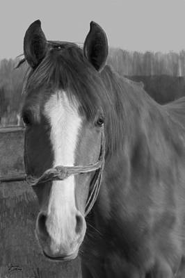 Horse Painting - Horse In Gray by Bruce Nutting