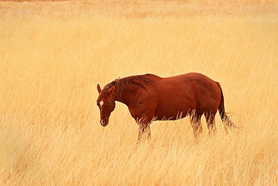 Photograph - Horse In Meadow - Capitol Reef Park - Utah by Dana Sohr
