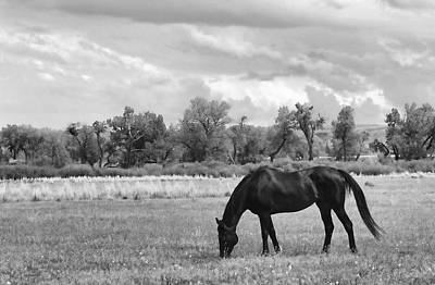 Photograph - Horse In Montana Pasture Black And White by Jennie Marie Schell