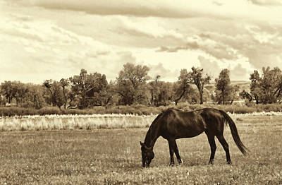 Photograph - Horse In Montana Pasture Sepia by Jennie Marie Schell