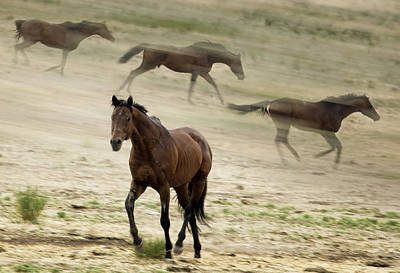 Photograph - Horse In Motion by Belinda Greb