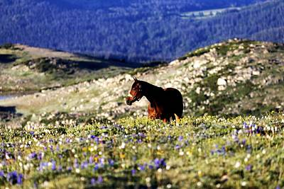 Horse In Mountain Wildflowers Art Print by Rebecca Adams