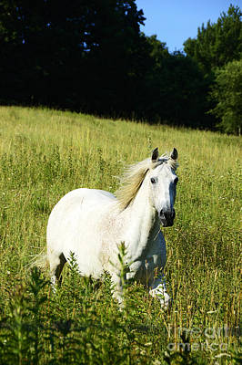 Two Horses Photograph - Horse In Pasture by Thomas R Fletcher