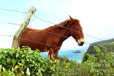 Photograph - Horse In Pololu Valley 2 by Theresa Ramos-DuVon