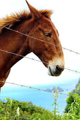 Photograph - Horse In Pololu Valley1 by Theresa Ramos-DuVon