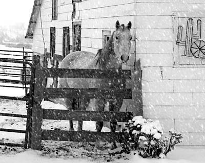 Photograph - Horse In Snow by Nikolyn McDonald