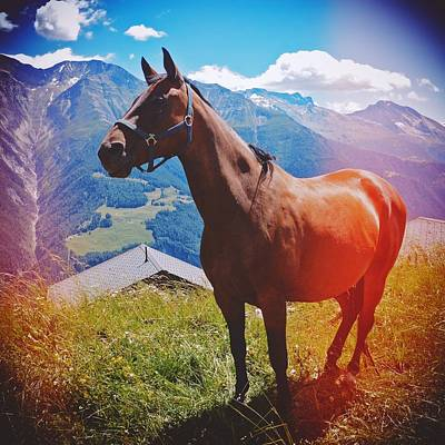 Mountain Photograph - Horse In The Alps by Matthias Hauser