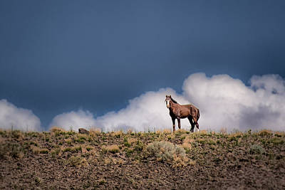 Wild Horses Photograph - Horse In The Clouds  by Janis Knight