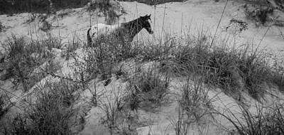 Horse In The Dunes Art Print